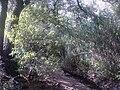 Barranco de los Cernícalos FSV 4 9 2010.JPG