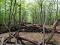 Barrier in the Hambach forest 08.jpg