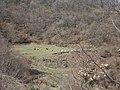 Baxhua,mali i bardh,molisht,berat - panoramio.jpg