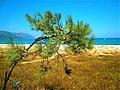 Beach detail Arbatax - panoramio.jpg