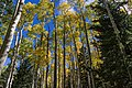 Bear Jaw Trail No. 26 (29861290191).jpg