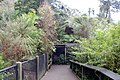 Beautiful Pathway at Rainbow Spring Rotorua NZ - panoramio.jpg