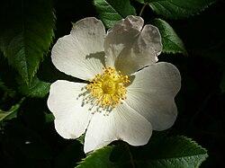 Beautifulflower5.jpg