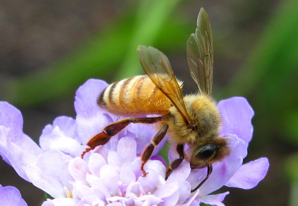 Bee on Red and Purple Flower · Free Stock Photo