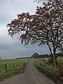 Beech Trees - geograph.org.uk - 1035012.jpg