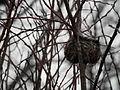 Bird Nest 02.jpg
