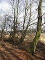 Bird boxes - geograph.org.uk - 1597339.jpg