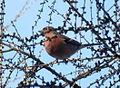 Birds14Slovakia4.JPG