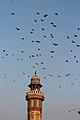 Birds flying over minaret at Wazir Khan Mosque.jpg