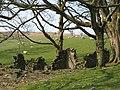 Blaen-heath - geograph.org.uk - 436140.jpg