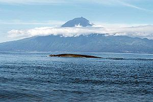 A Blue Whale set against the backdrop of the Azores