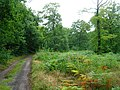 Blean Woods Nature Reserve - geograph.org.uk - 534476.jpg