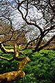 Blickling Hall, Gardens and Park (4514849790).jpg