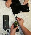 Blood pressure cat doppler.JPG