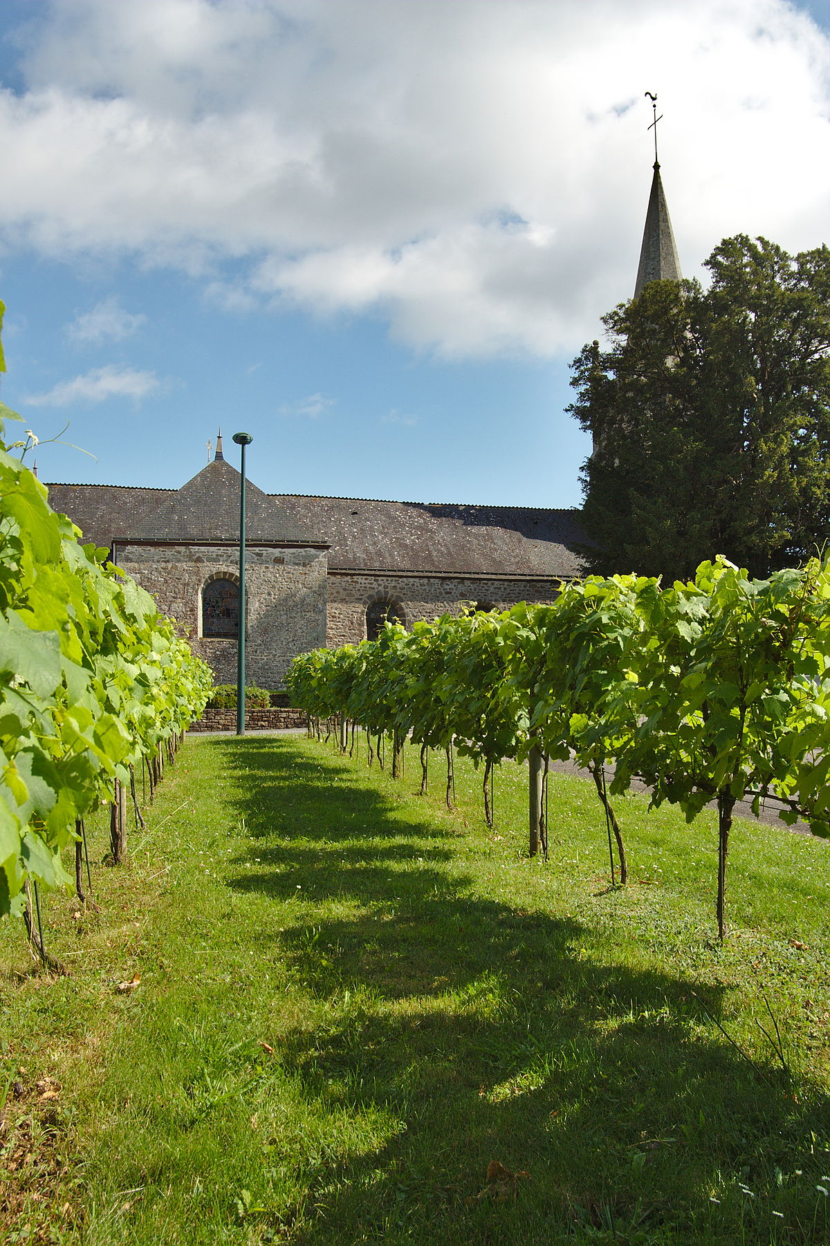 Vignoble De Bretagne Wikipedia