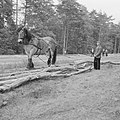 Bosbewerking, arbeiders, dieren, boomstammen, vervoeren, paarden, Bestanddeelnr 251-9537.jpg