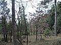 Bosco d'inverno - panoramio.jpg