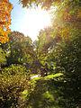 Botanička bašta Jevremovac, Beograd, jesenje boje, svetlost i senke 11.jpg