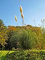 Botanička bašta Jevremovac, Beograd - jesenje boje, svetlo i senke 39.jpg