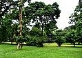 Botanic garden limbe34.jpg