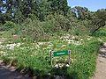 Botanischer-garten-ffm006.jpg