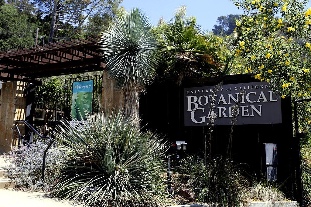 Botanischer Garten in Berkeley, California.JPG