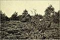 Botanisk tidsskrift (1914) (20405017695).jpg