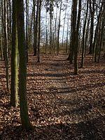 Branišovský les