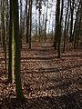 Branišovský les, cesta 01.jpg