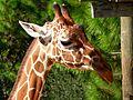 Brevard Zoo, Viera FL - Flickr - Rusty Clark (72).jpg