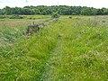 Bridleway to nowhere, Swincliffe, Birkenshaw - geograph.org.uk - 1374243.jpg
