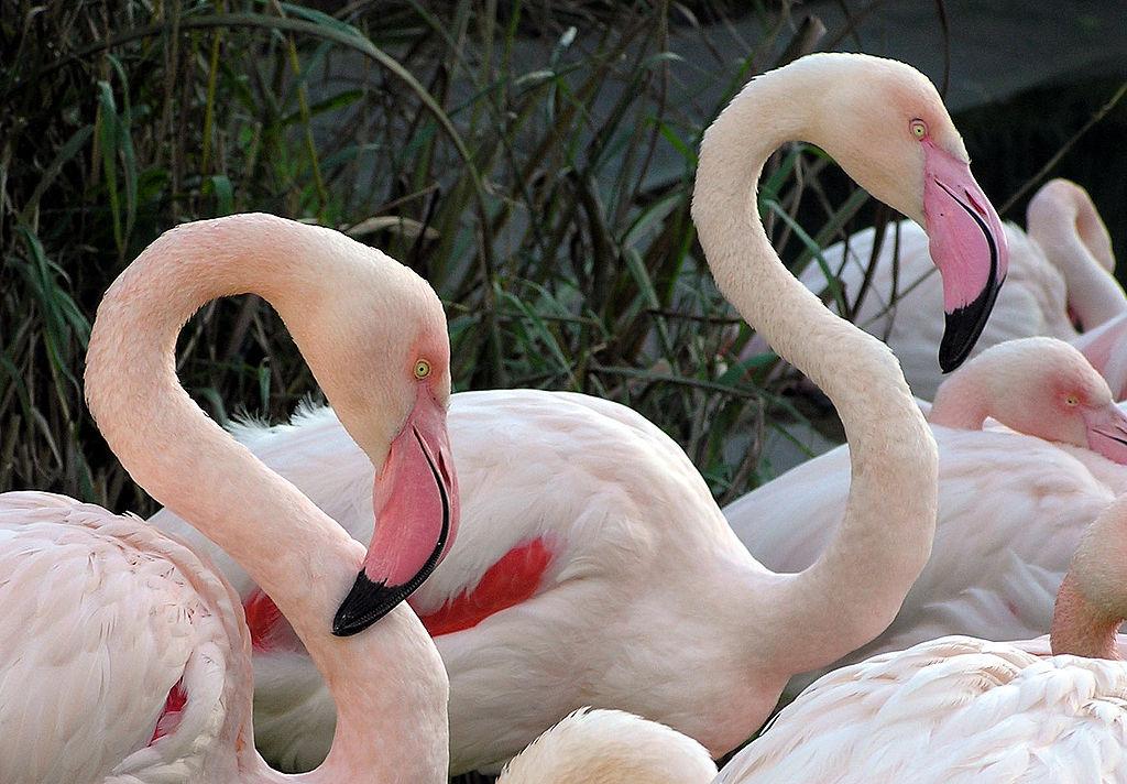 the pink flamingo essay