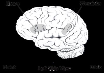 Sinirdilbilim - Wikiwand