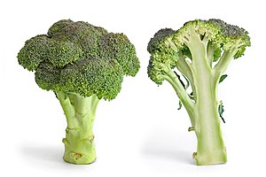 Broccoli and its cross section isolated on a w...