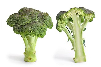 Broccoli - Image: Broccoli and cross section edit