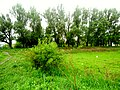 Brody, Lviv Oblast, Ukraine - panoramio (257).jpg