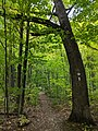 Bruce Trail marker in Clappison Woods, Watertown - 20190929 - 01.jpg