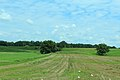 Bucolic Vista on Austin Road, Saline Township, Michigan.JPG