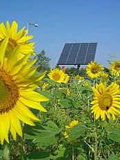 Zonnebloemen en zonnepaneel. Energie voor plant en mens