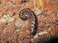 Bug - Flickr - GregTheBusker (1).jpg