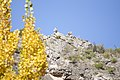 Buitres - panoramio (2).jpg