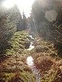 Burn in Troston Forest - geograph.org.uk - 691404.jpg