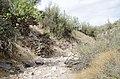 Butcher Jones Trail to Pinter's Point Loop, Tonto National Park, Saguaro Lake, Ft. McDowell, AZ - panoramio (161).jpg