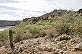 Butcher Jones Trail to Pinter's Point Loop, Tonto National Park, Saguaro Lake, Ft. McDowell, AZ - panoramio (57).jpg