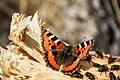 Butterfly&fly.jpg