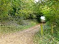 Byway through Stanway Ash Wood - geograph.org.uk - 1546044.jpg