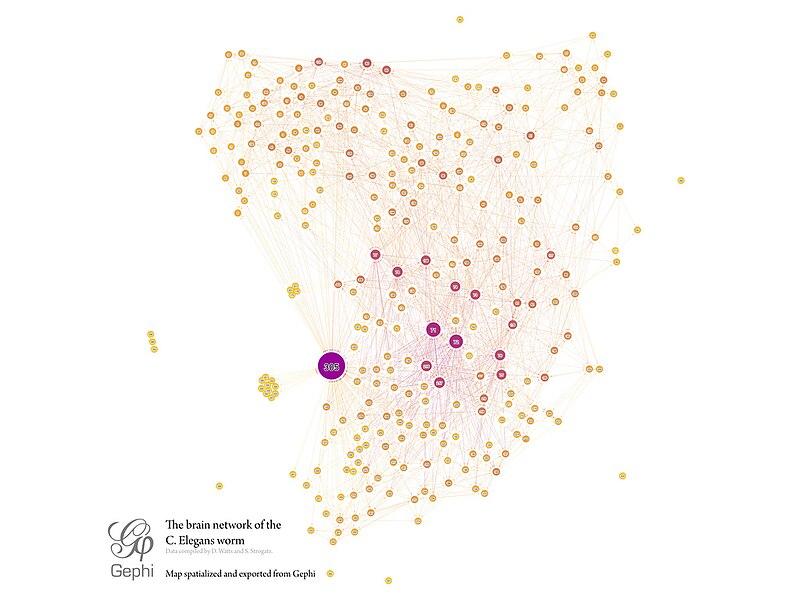 File:C.elegans-brain-network.jpg