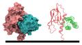 CGRP-receptor+RAMP1 3N7P.png