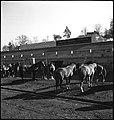 CH-NB - USA, Lexington-KY- Pferde (Lokalisierung unsicher) - Annemarie Schwarzenbach - SLA-Schwarzenbach-A-5-09-048.jpg