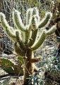 Cactus Garden, Living Desert 3-15i (16759531946).jpg